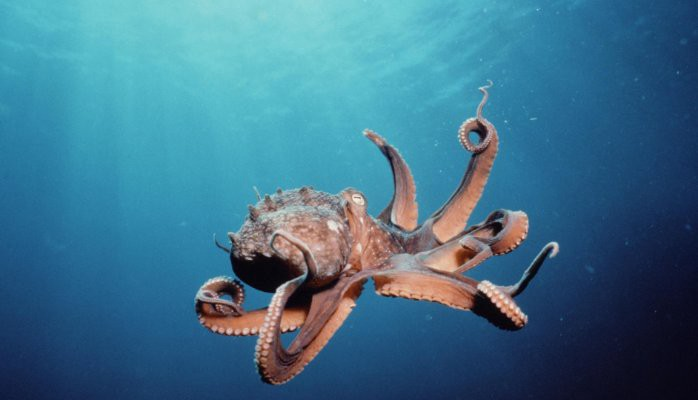 Octopus Marine water monitoring